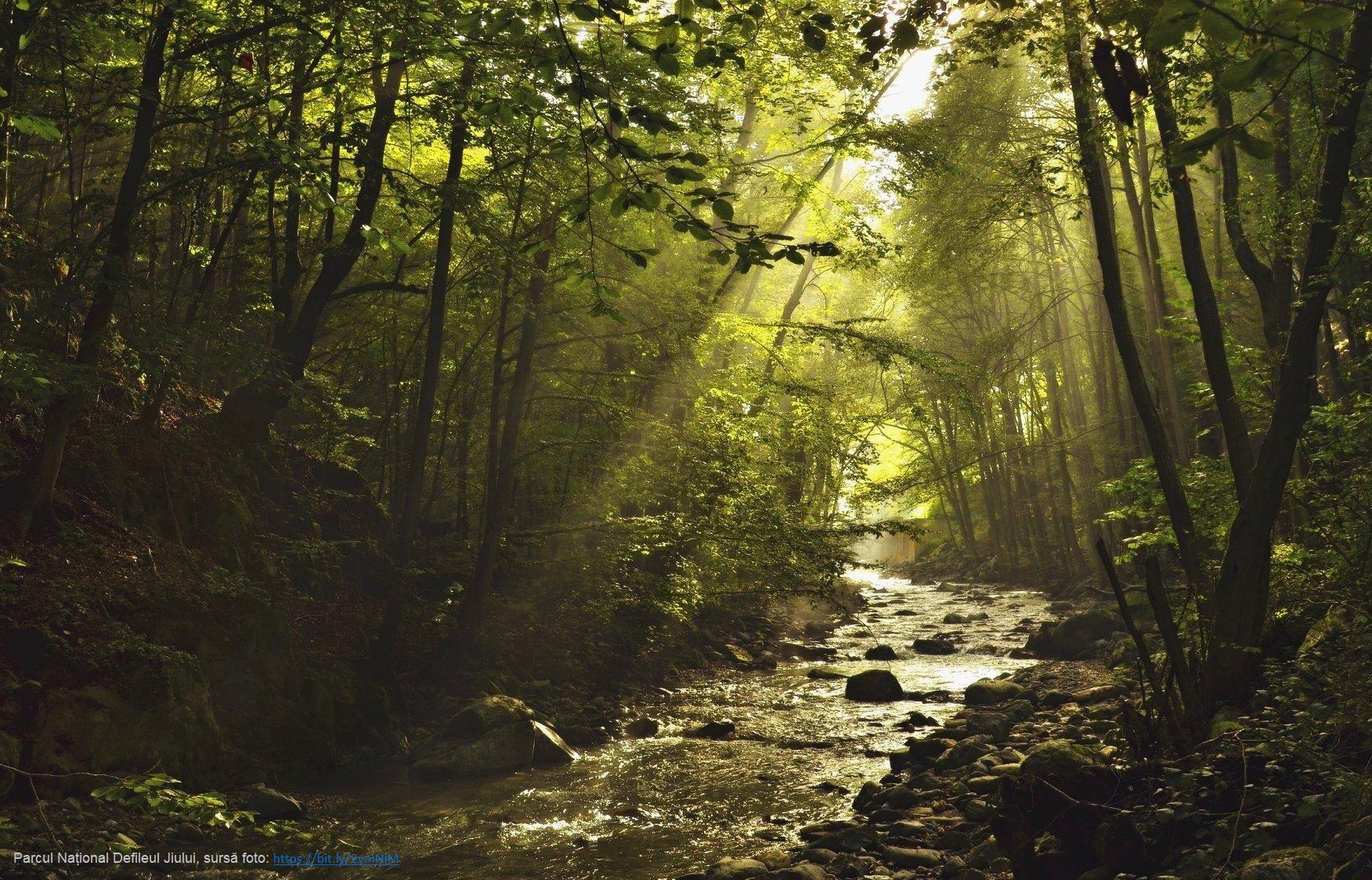 Parcul Național Defileul Jiului, sursă foto: https://bit.ly/2yoiNjM